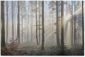 Plakát Sluneční paprsky přes mlhavé lesa