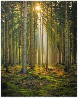 Plakát Sonnenstrahlen im Nadelwald im Morgennebel