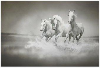 Plakat Stado białych koni biegnących przez wody