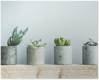 Plakát Sukulenty v DIY betonu hrnci. Skandinávský interiér pokoje výzdoba