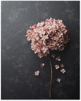Plakat Suszone kwiaty hortensji na czarnym rocznika tabeli widoku z góry. Płaski lay stylizacji.