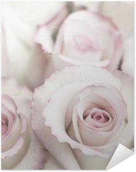Plakát Světle růžová růže