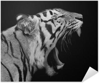 Plakát Tygr sumaterský Roaring