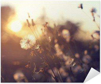 Plakát Večer podzim příroda na pozadí, krásný louka pampeliška květy v poli na oranžové slunce. ročník efekt filtru, selektivní zaměření bod, malá hloubka ostrosti
