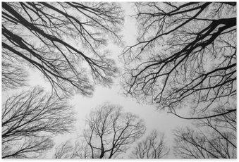 Plakát Větev mrtvý strom