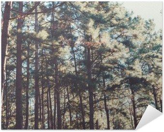 Plakát Vinobraní na pozadí přírody lesních borovice.