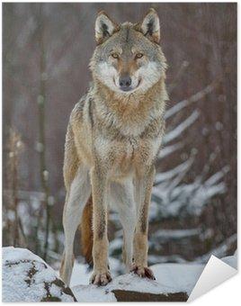 Plakát Vlk