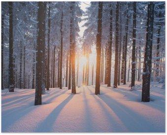 Plakát Západ slunce v lese v zimním období