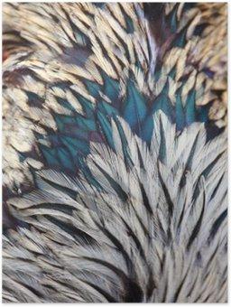 Plakát Zářivě barevné peří ptáků