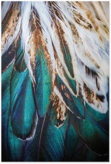 Plakát Zářivě barevné peří skupina nějakého ptáka