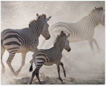 Plakát Zebry na útěku