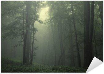 Plakát Zelený les po dešti