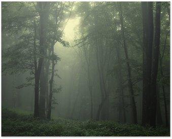 Plakat Zielony las po deszczu