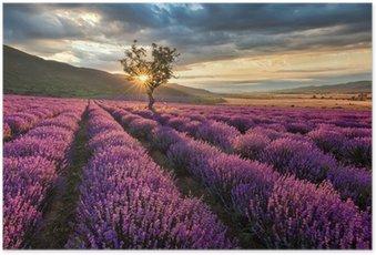 Poster Atemberaubende Landschaft mit Lavendelfeld bei Sonnenaufgang