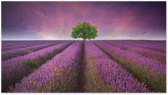 Poster Atemberaubende Lavendelfeld Landschaft Sommer Sonnenuntergang mit einzelnen Baum