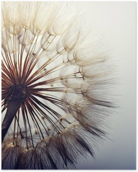 Poster big dandelion on a blue background