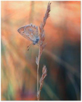 Poster Farfalla