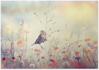 Poster Feld mit wilden Blumen und ein Vogel