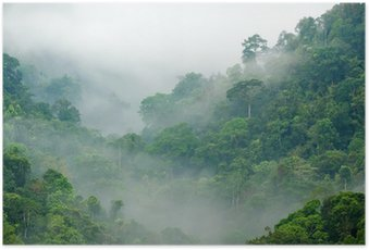 Poster Foresta pluviale mattina nebbia