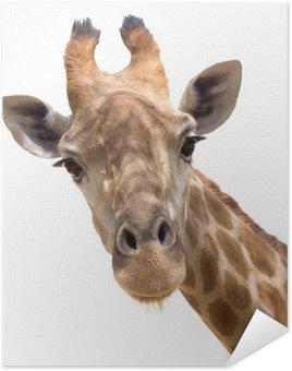 Poster Giraffe primo piano