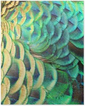 Poster Grünen Pfauenfedern