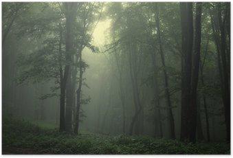 Poster Grüner Wald nach regen