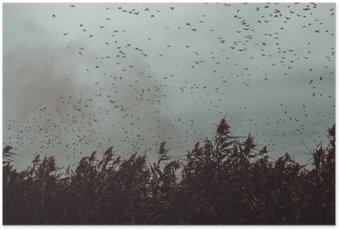 Poster Haufen Vögel der Nähe von Zuckerrohr in einem dunklen Himmel-Vintage-Stil schwarz und weiß fliegen