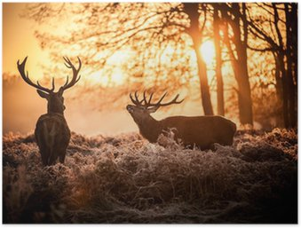 Poster HD Cervo in sole del mattino