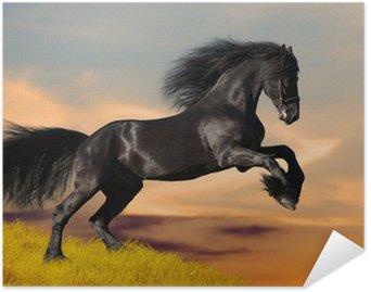 Poster HD Nero galoppa cavallo frisone nel tramonto