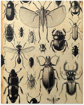 Poster Insekten Retro-Hintergrund