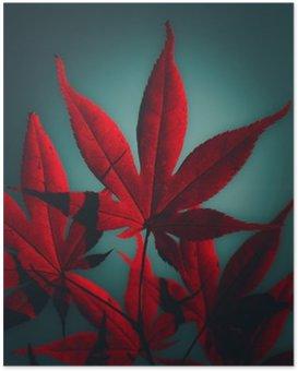Poster Japanische Ahornbaum in karminrot