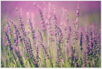 Poster Lavendelblüten