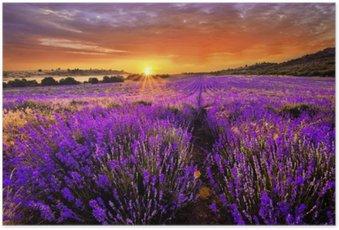 Poster Lavendelfelder