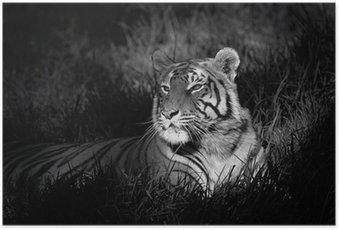 Poster Monochrome Bild eines Bengal-Tiger