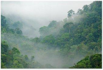 Poster Morgennebel im Regenwald