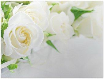 Poster Nahaufnahme von weißen Rosen
