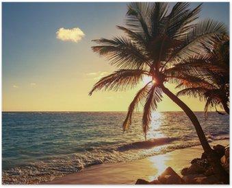 Poster Palma sulla spiaggia tropicale