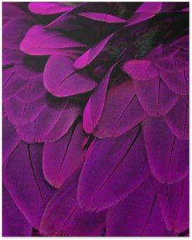 Poster Piume; Viola