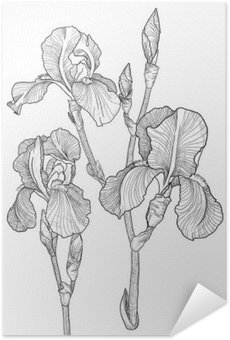 Poster Pixerstick Schizzo di mazzo di iris in fiore