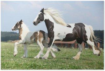 Poster Portrait der schönen arabischen Pferd