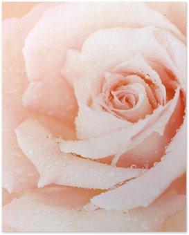 Poster Rosa nass stieg Hintergrund