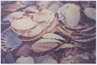 Poster Scallop Muscheln Haufen