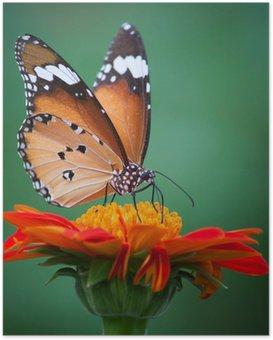 Poster Schmetterling auf einer Blume