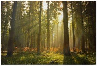 Poster Schönen Wald