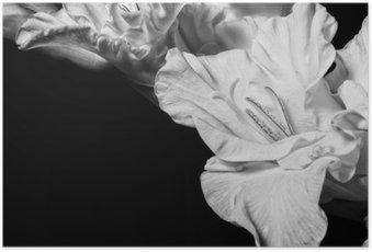 Poster Schwarz-Weiß-Gladiole