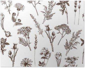 Poster Vektor nahtlose Muster mit Tinte Hand Heilkräuter Skizze gezeichnet