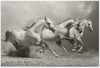 Poster Weiße Pferde im Staub