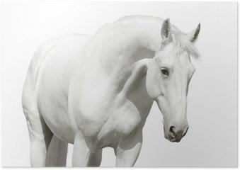 Poster White horse high key