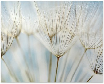 Póster Abstract dandelion flower background
