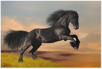 Póster Black Friesian horse gallops in sunset